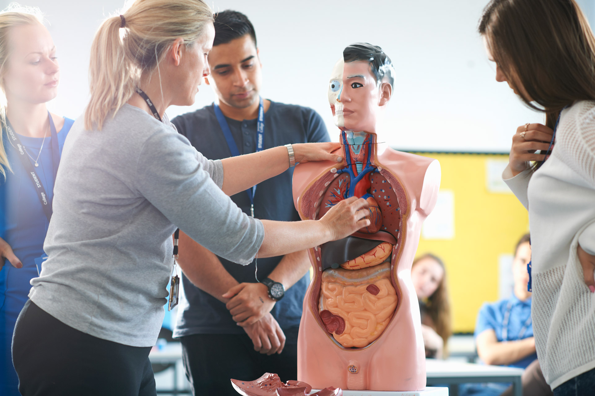Introduction To Human Anatomy Ucla Continuing Education