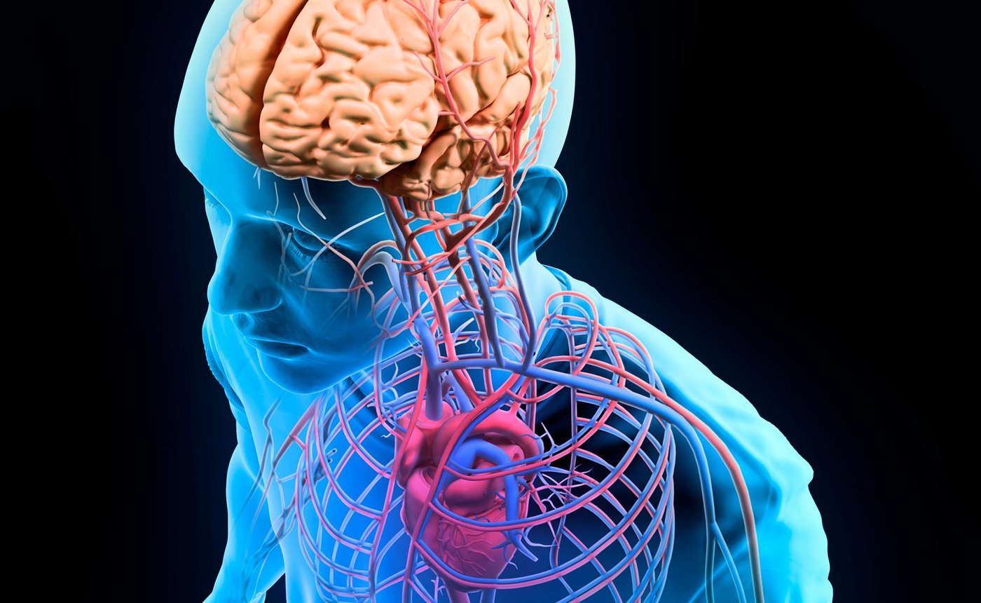 Human Anatomy And Physiology Ucla Continuing Education